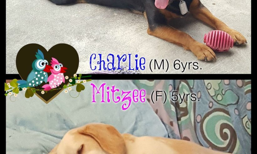 Charlie and Mitzee are adopted