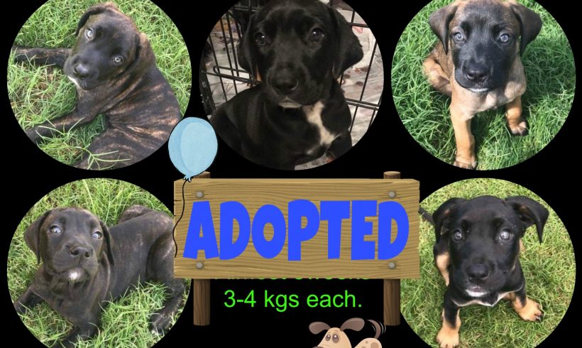 Catahoula pups are adopted