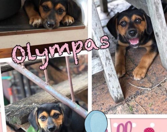 Olympas is adopted