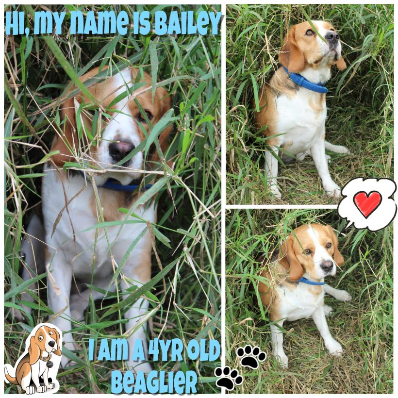 Bailey is now adopted