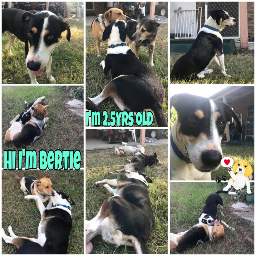 Bertie is adopted