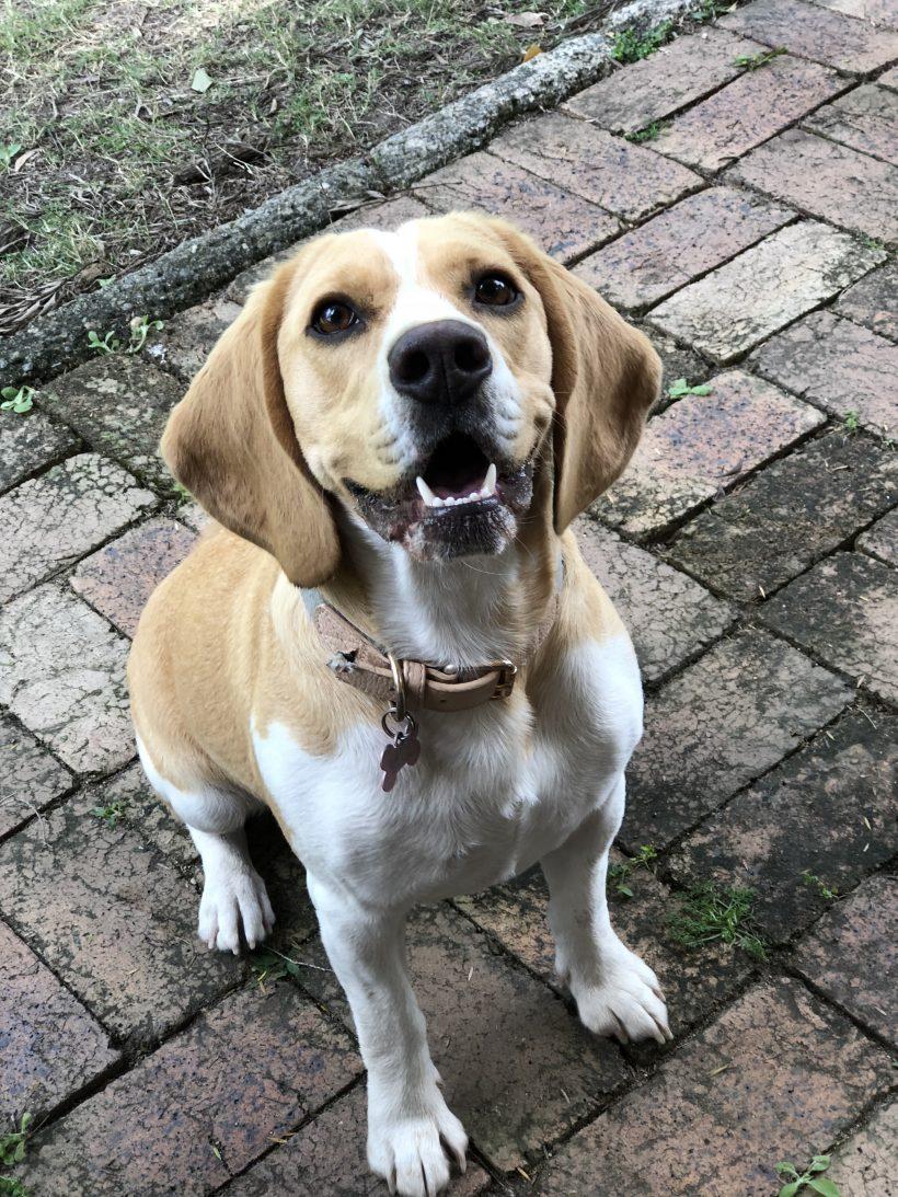 Sadie is now adopted