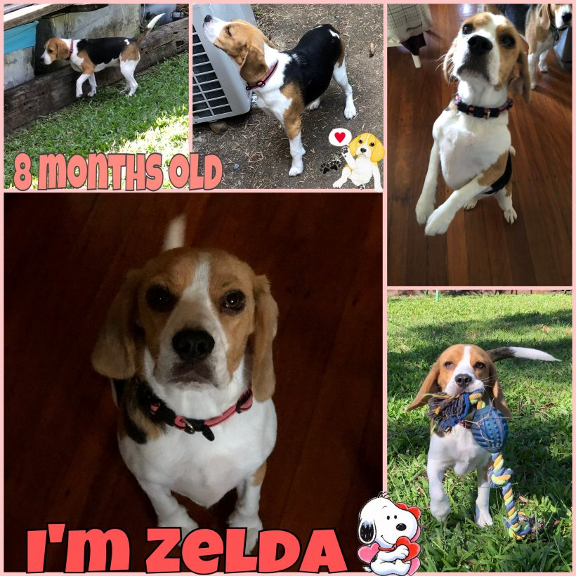Zelda is now adopted