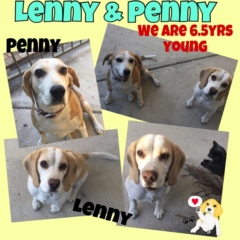Lenny and Penny are adopted