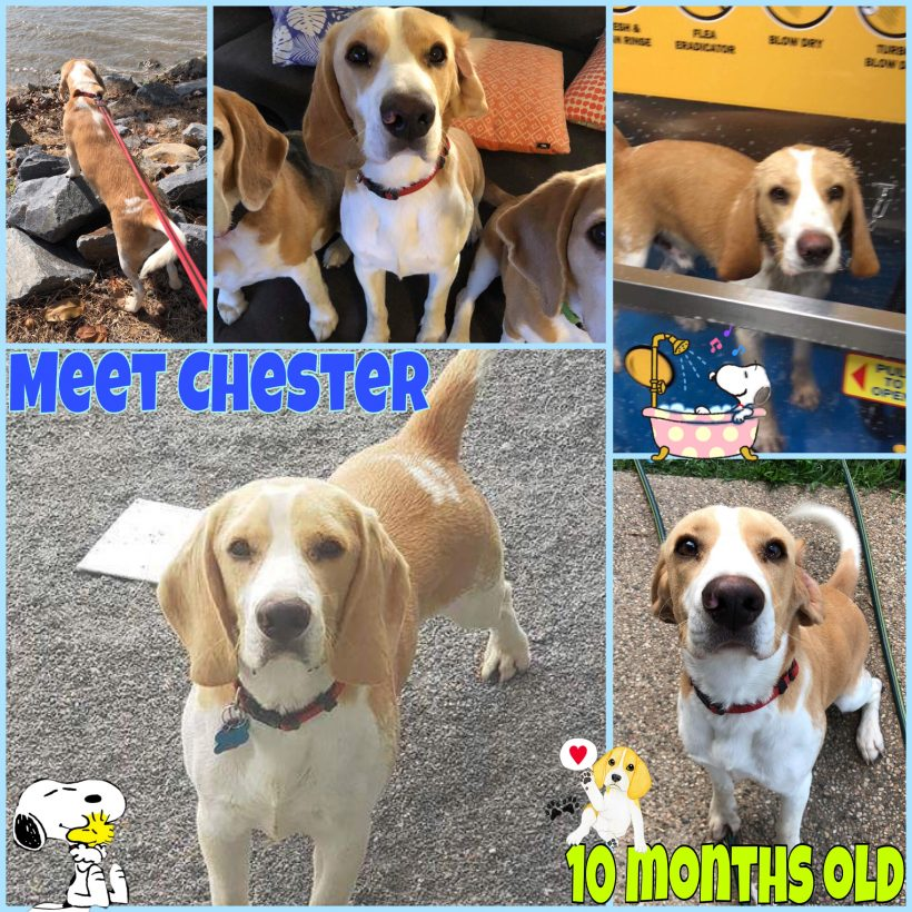 Chester is adopted