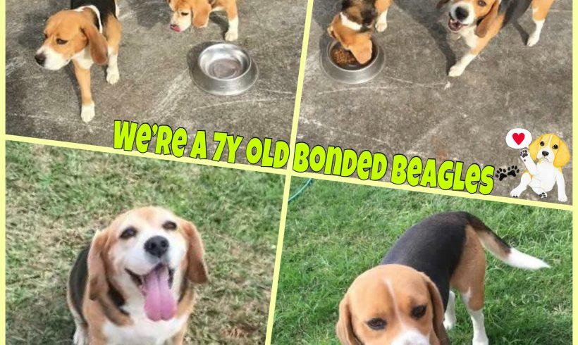 Bronson & Chloe are adopted