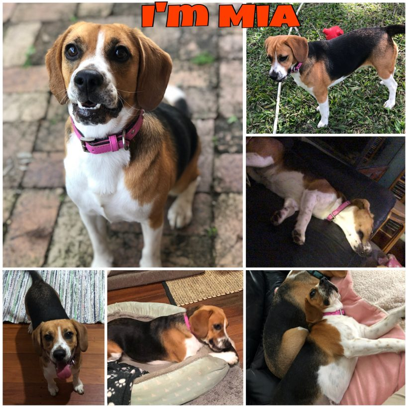 Mia is now adopted
