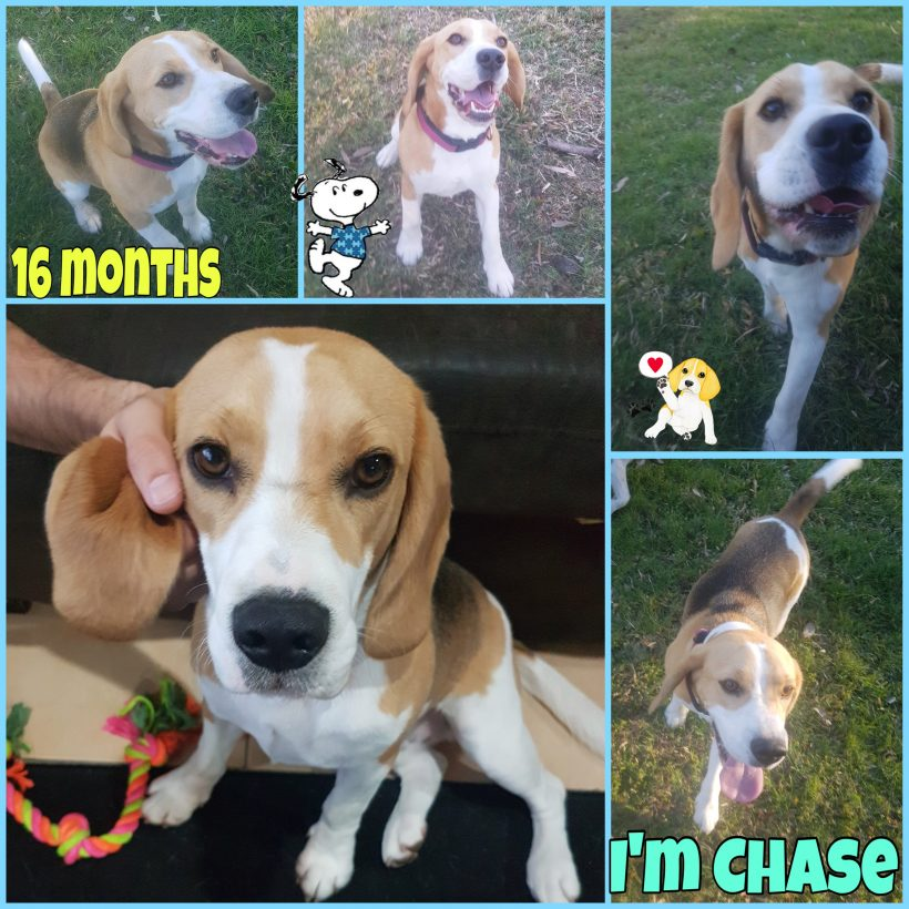 Chase has been adopted