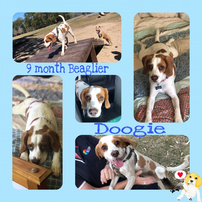 Dougal is adopted