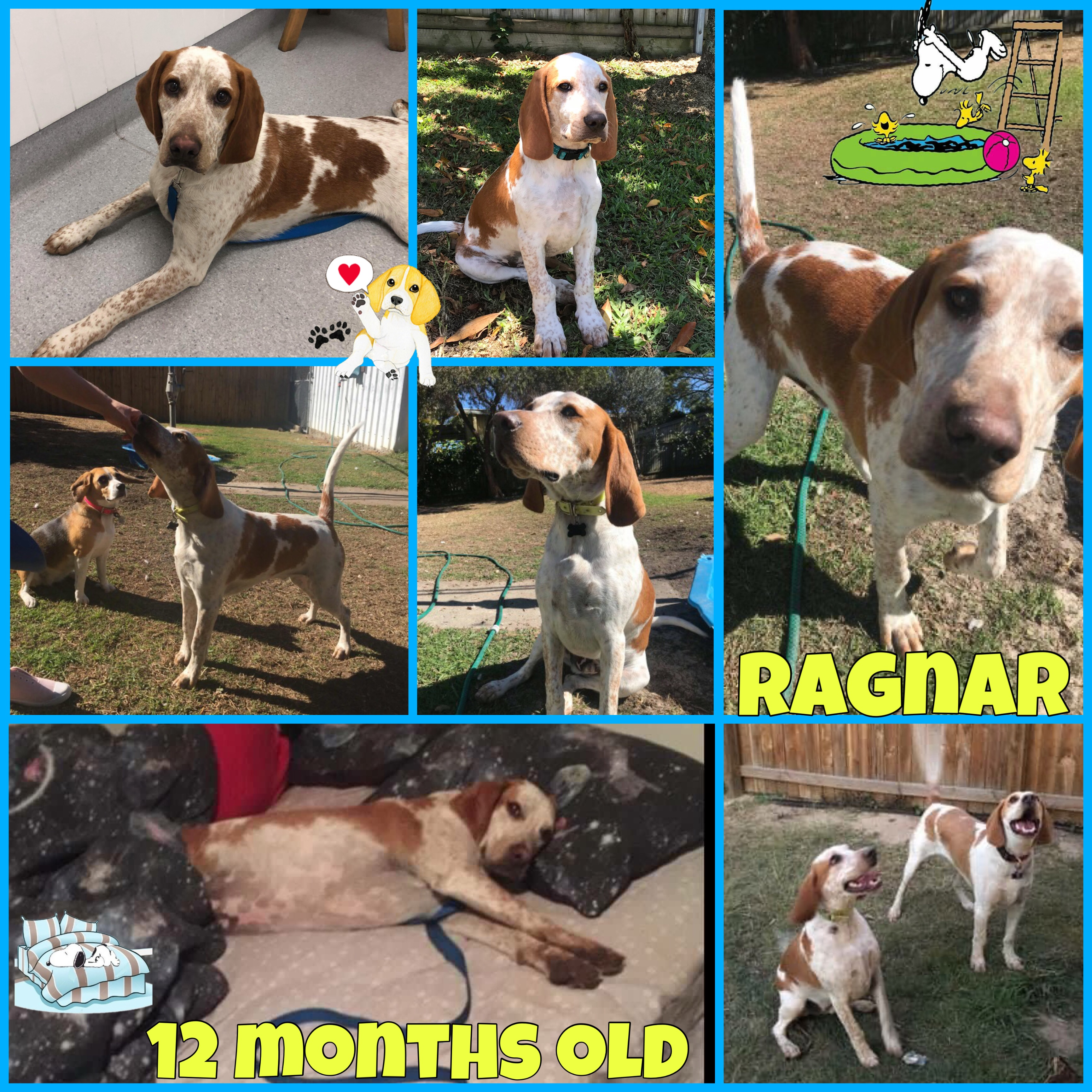 Raggy is adopted