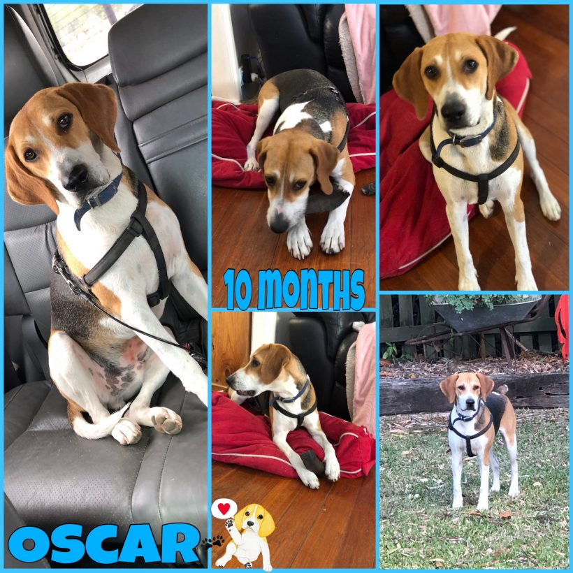 Oscar is adopted
