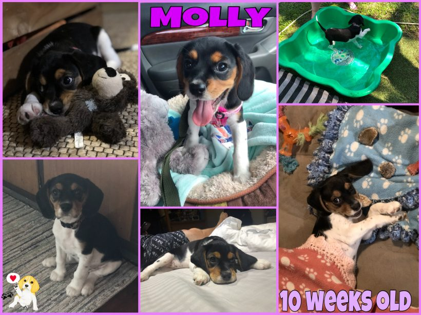 Molly is adopted