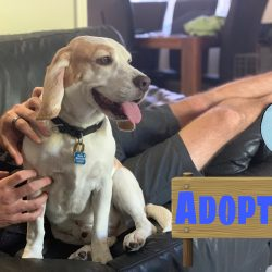 Major is adopted!