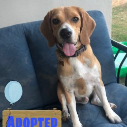 Max is adopted