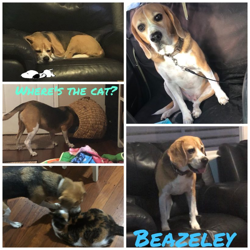 Beazeley is adopted