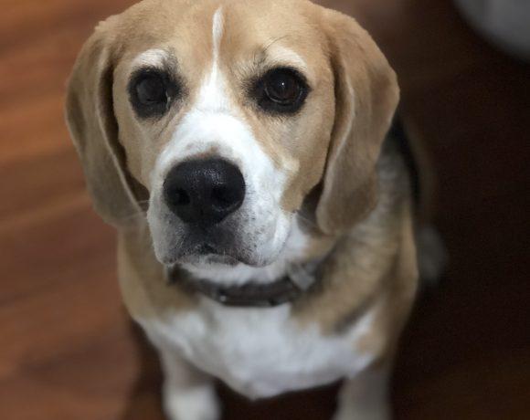 Beazeley is adopted