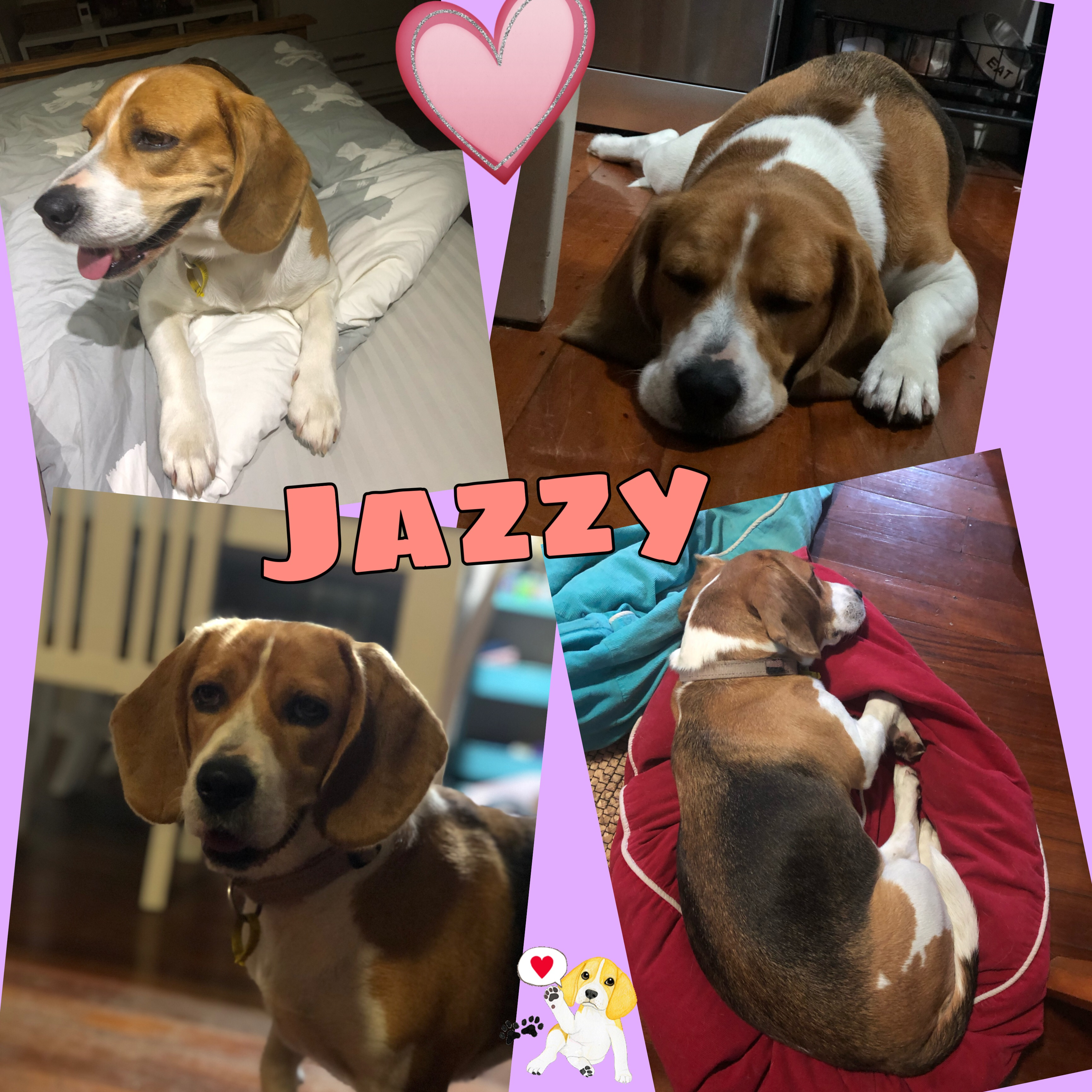Jazzy is adopted