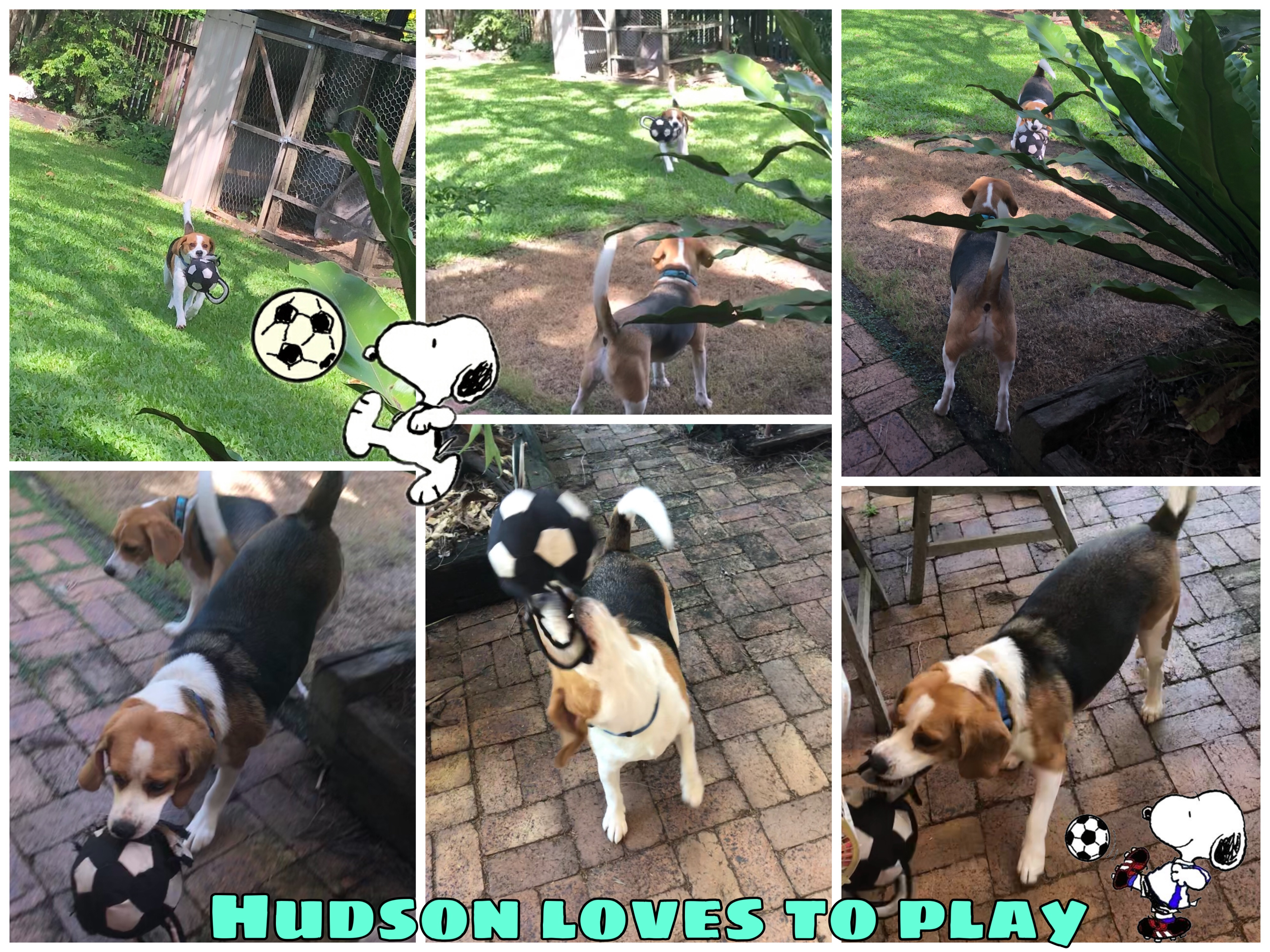 Hudson is adopted