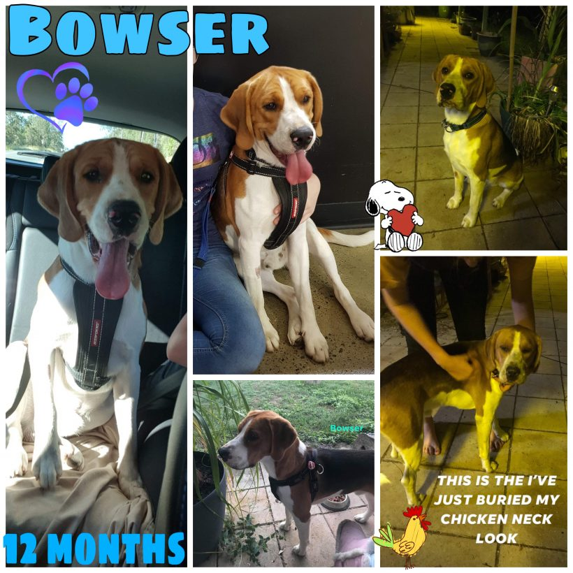 Bowser is adopted