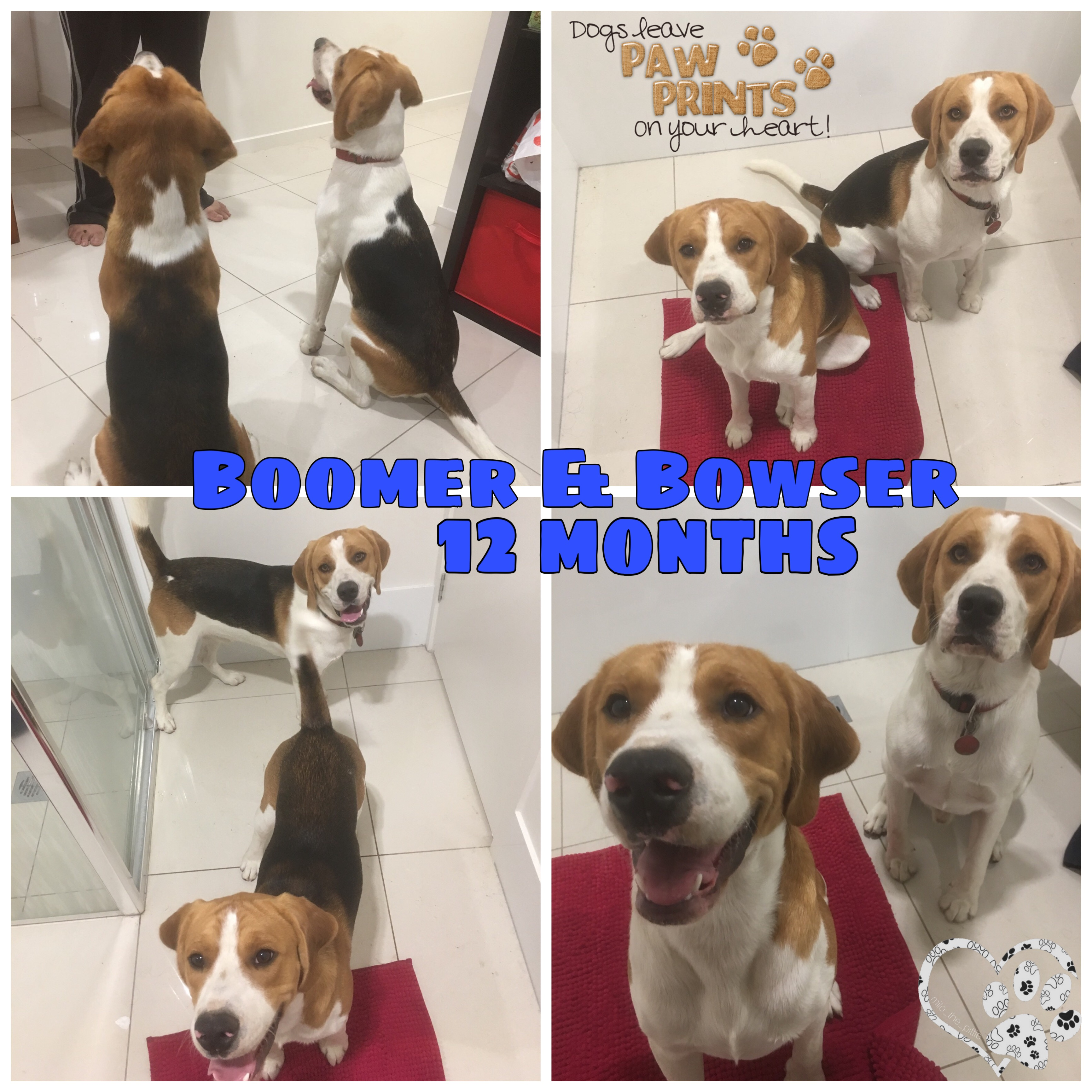 Boomer is adopted