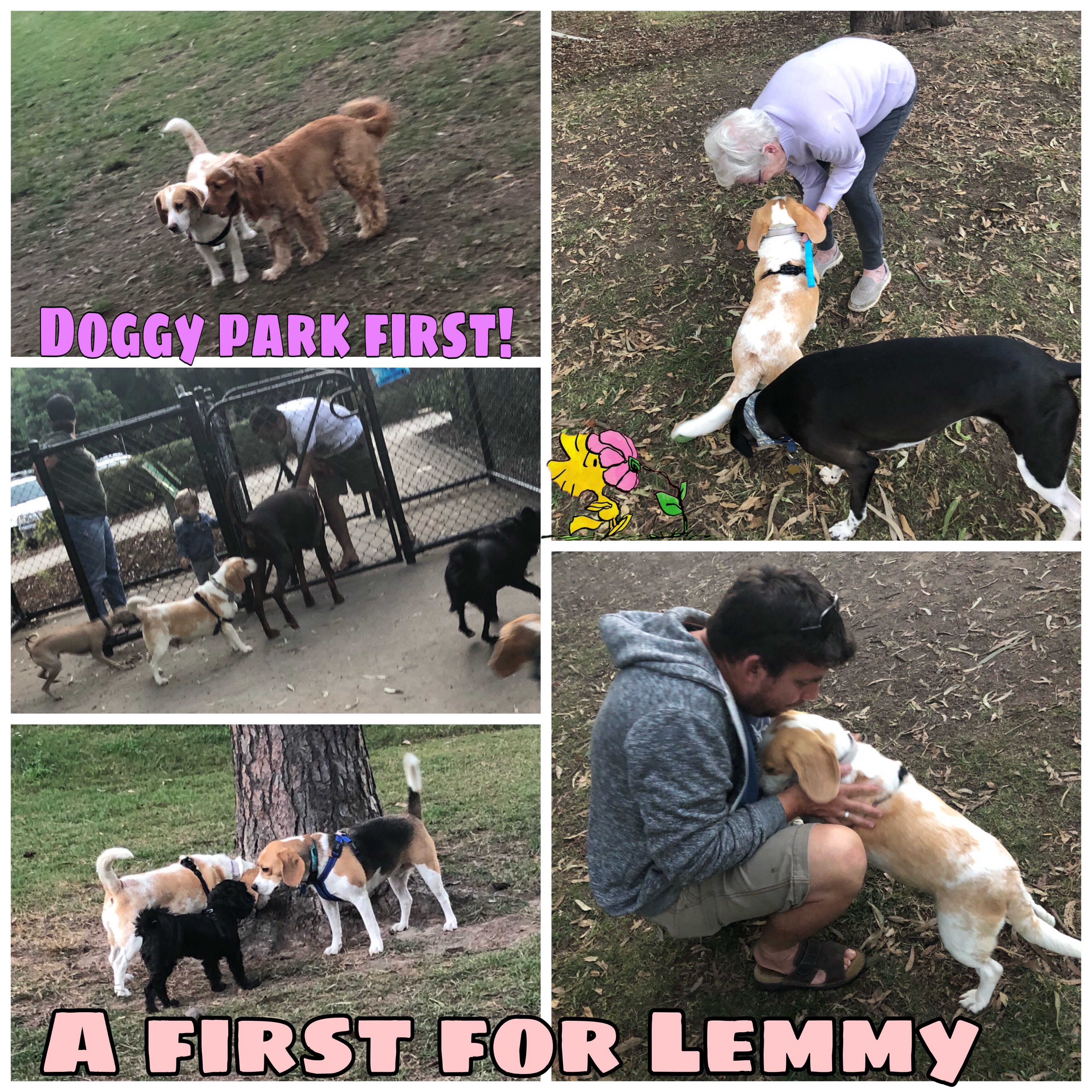 Lemmy is adopted