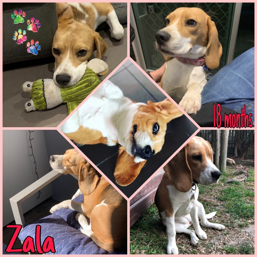 Zala is adopted