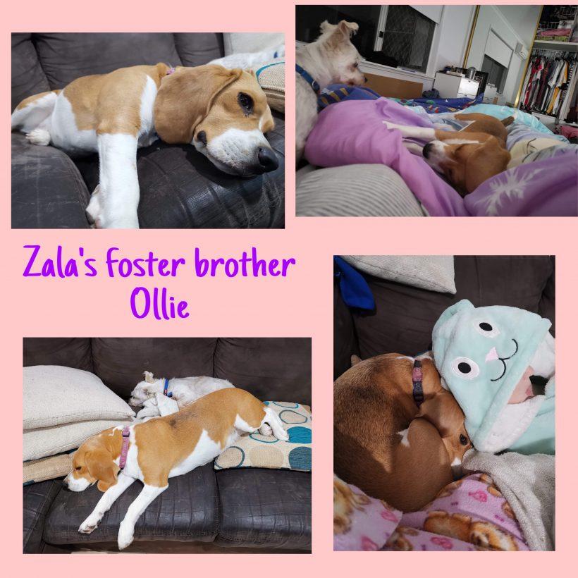 Zala is on trial