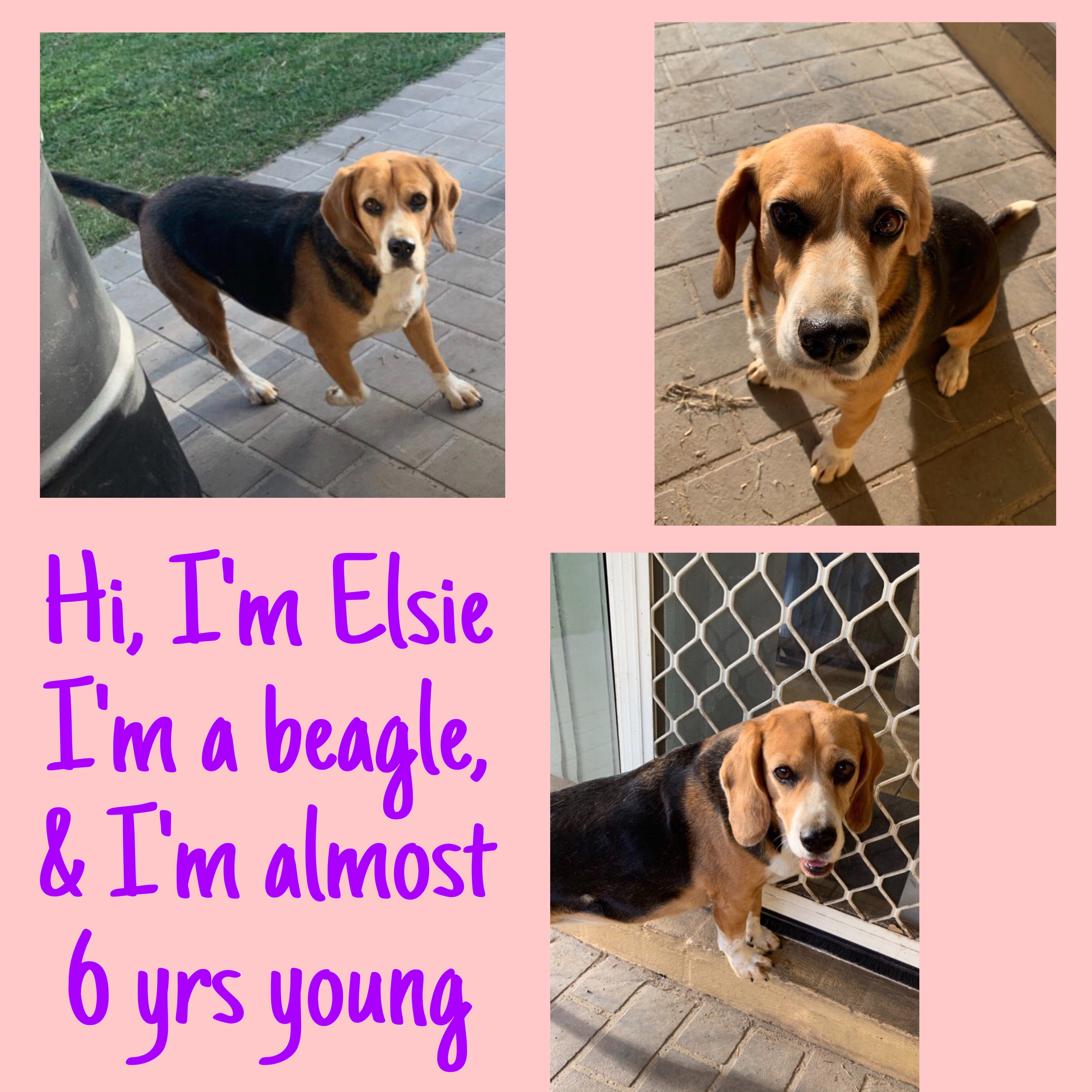 Elsie is  Adopted